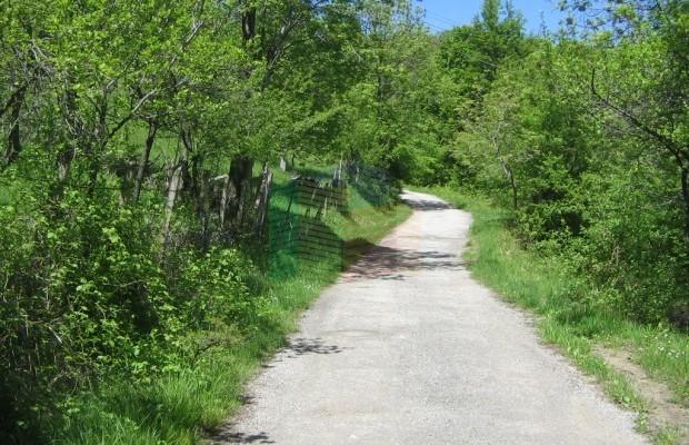 Снимка №3 Урегулиран парцел продава in Габрово област, Зелено дърво
