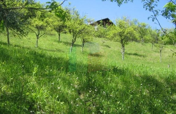 Снимка №4 Урегулиран парцел продава in Габрово област, Зелено дърво