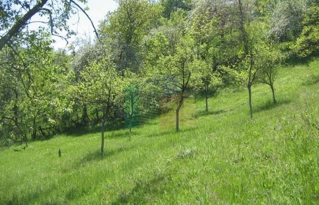 Снимка №7 Урегулиран парцел продава in Габрово област, Зелено дърво