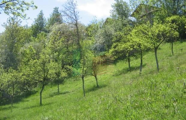 Снимка №8 Урегулиран парцел продава in Габрово област, Зелено дърво