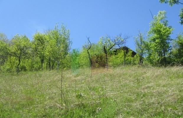 Снимка №9 Урегулиран парцел продава in Габрово област, Зелено дърво