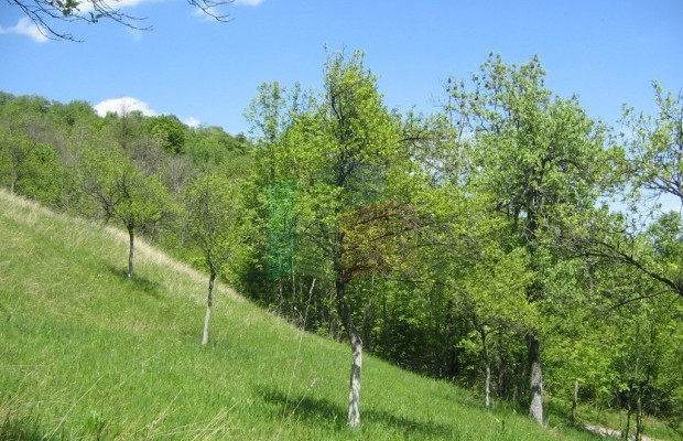 Снимка №1 Урегулиран парцел продава in Габрово област, Зелено дърво