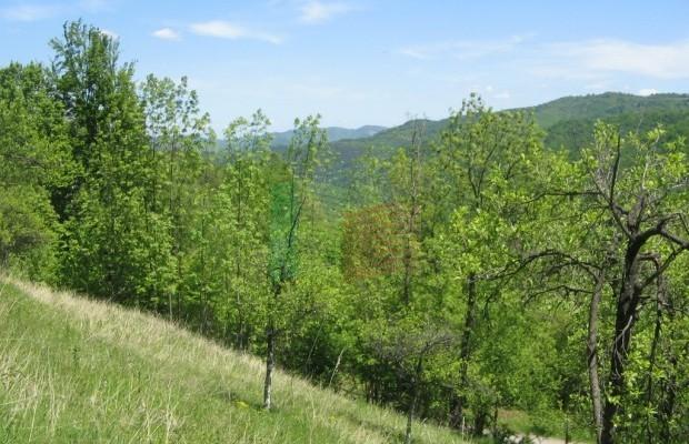 Снимка №10 Урегулиран парцел продава in Габрово област, Зелено дърво