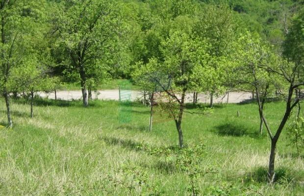 Снимка №11 Урегулиран парцел продава in Габрово област, Зелено дърво