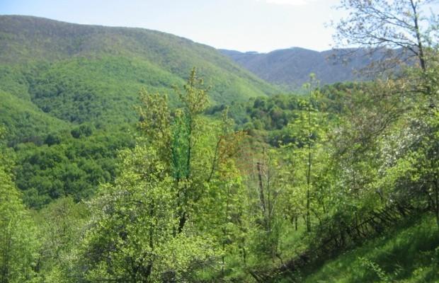 Снимка №12 Урегулиран парцел продава in Габрово област, Зелено дърво