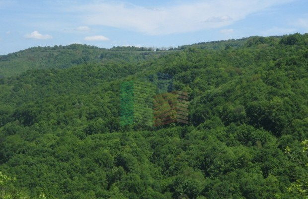 Снимка №13 Урегулиран парцел продава in Габрово област, Зелено дърво