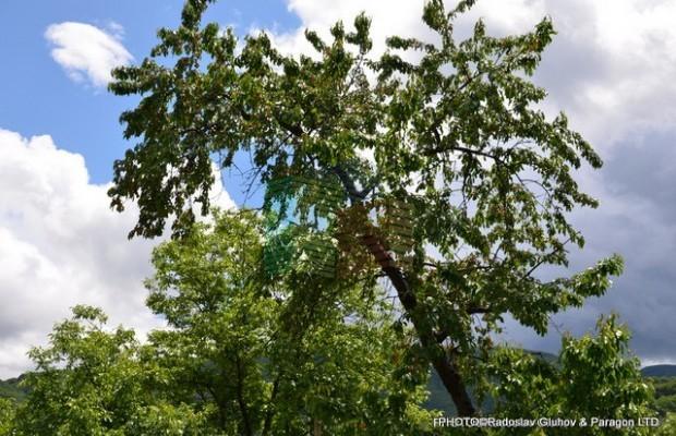 Снимка №15 Селска къща продава in Габрово област, Зелено дърво